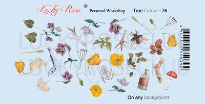 True Colour 76 by #LVS